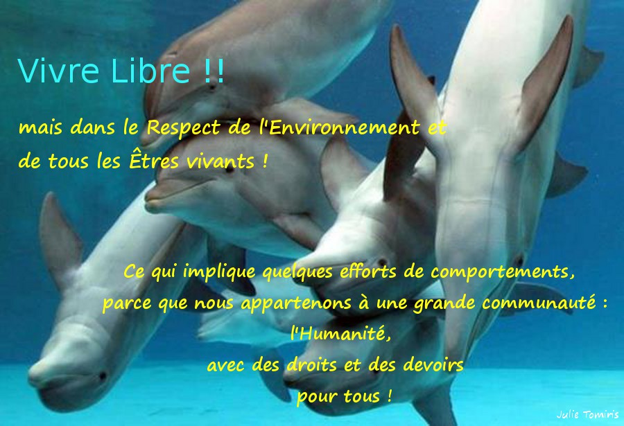 Écoutons les Dauphins, respectons l'Océan ! dans Reflexions Vivre-Libre