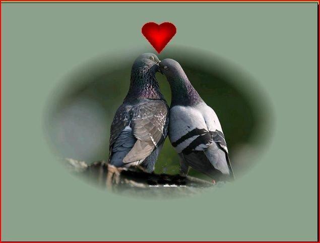 Quand les Hommes vivront d'Amour ! dans Diaporamas choisies Pigeons-coeur