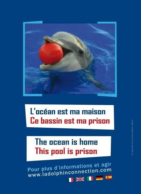 Pour une Europe sans Delphinarium dans Mes revoltes 21263_557590657615156_1491554362_n-1