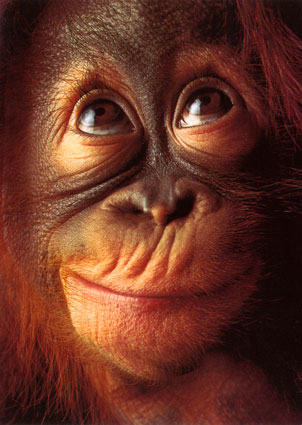 GREEN orangoutan-jeune-11